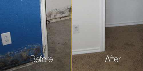 Before and after cleaning mold in wall and cabinate